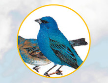 Birds and Bards App